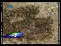 فيلم وثائقي.. النحل القاتل