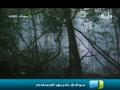 فيلم وثائقي ..اليغور - القرد المرقط